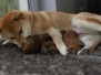 Our puppies LITTER E