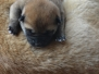 Our puppies LITTER N
