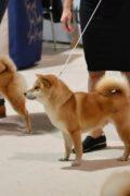 WORLD DOG SHOW 2021 BRNO